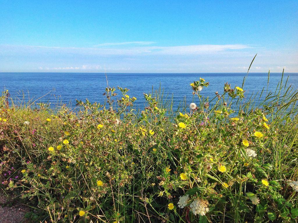flores-silvestres-mar-cantabrico