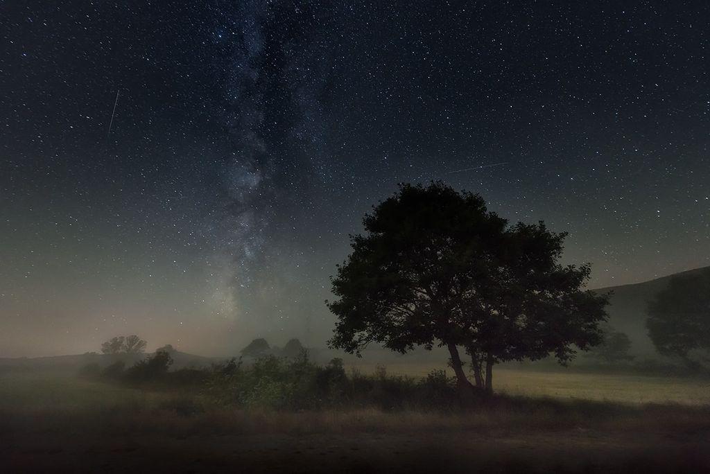 arbol-noche-estrellada
