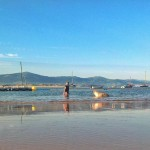 Un cole perruno en la bahía de Santander