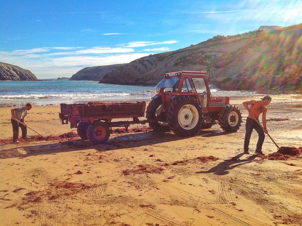 algas-tractores-la-arnia-cantabria