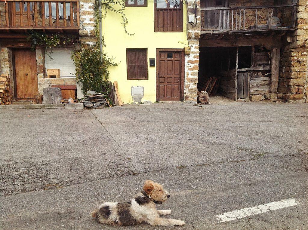 los-tojos-perro-cantabria