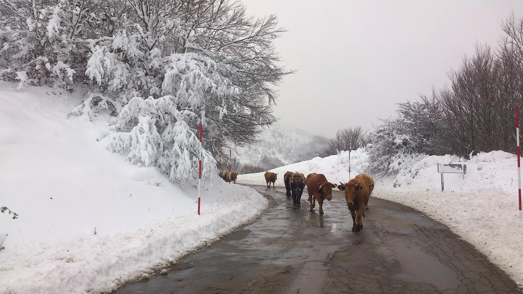 liebana-vacas-fran-gonzalez
