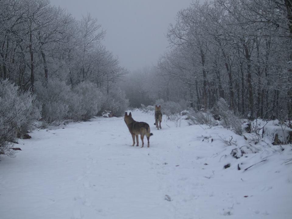 el-endino-nando-rojas-perros