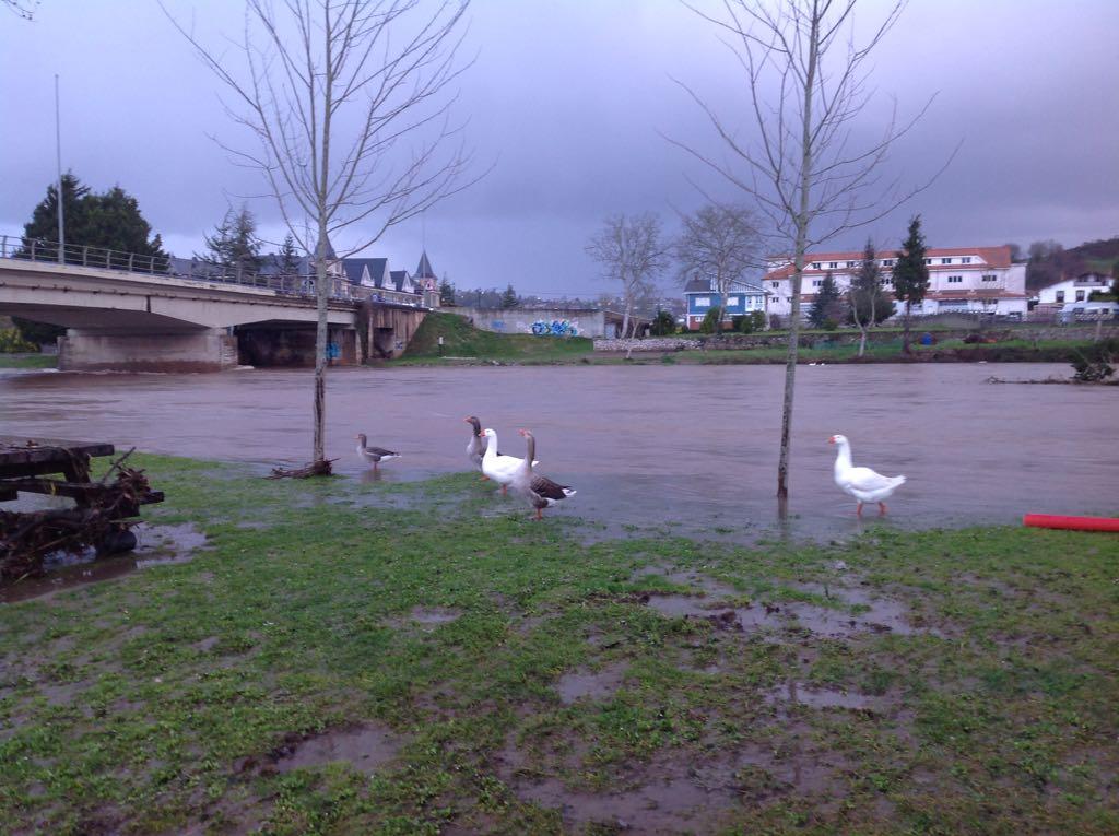 pas-patos-inundaciones