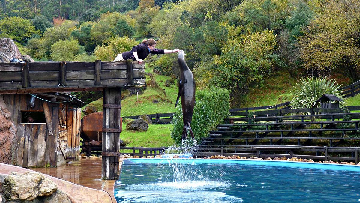 Espectaculo-con-leones-marinos-en-el-parque-de-la-naturaleza-de-Cabarceno--Cantabria--Spain