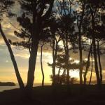 Un amanecer entre pinos y salitre