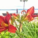 Flores junto a la bahía