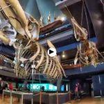 Museo Marítimo de Santander