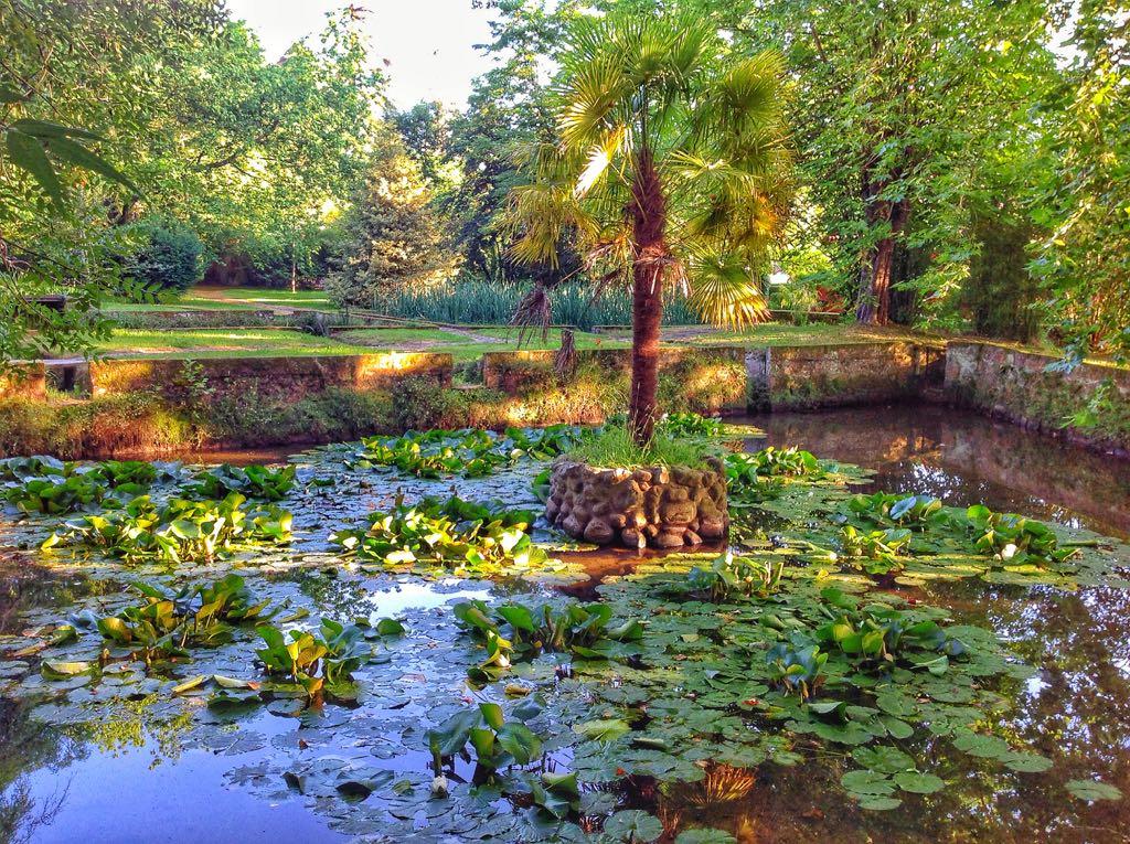 nenufares-jardin-carrejo