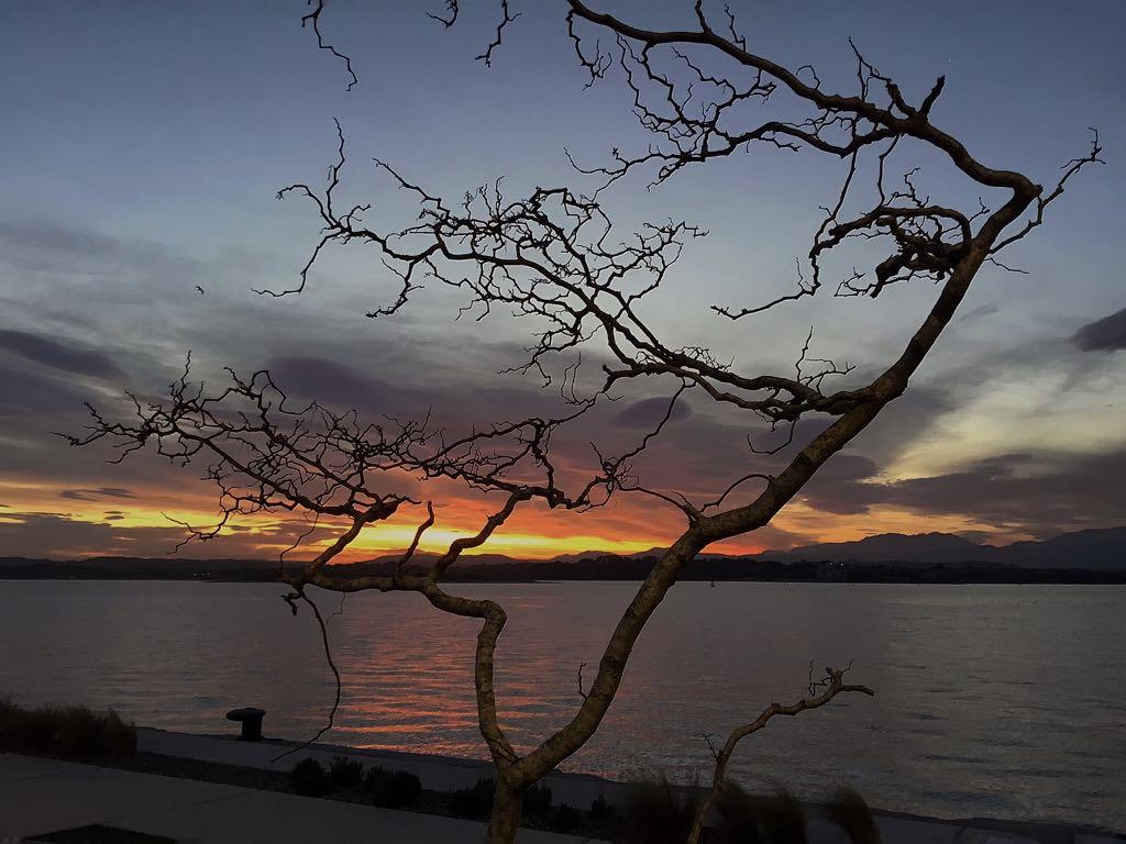 arbol-amanecer-santander