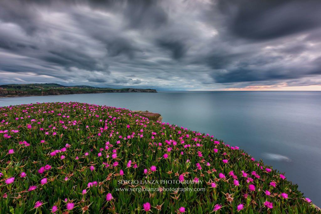 flores-suances-sergio-lanza