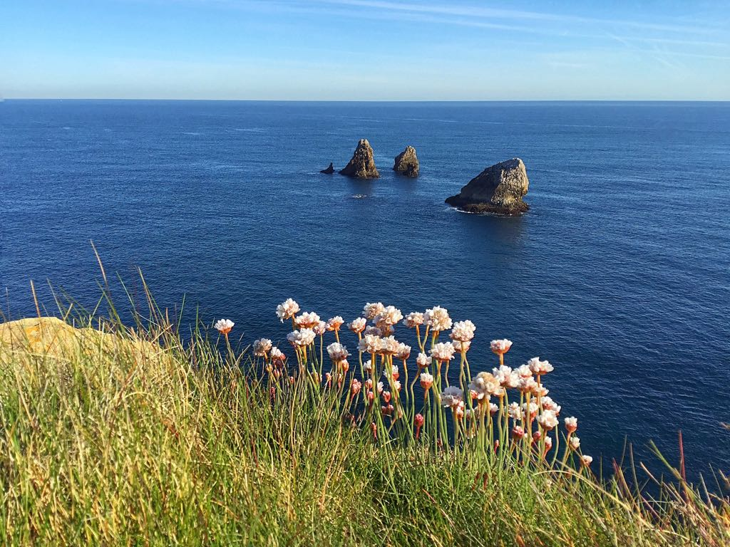flores-costa-quebrada-cantabria