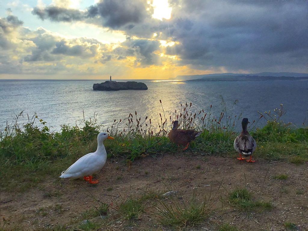 amanecer-magdalena-patos