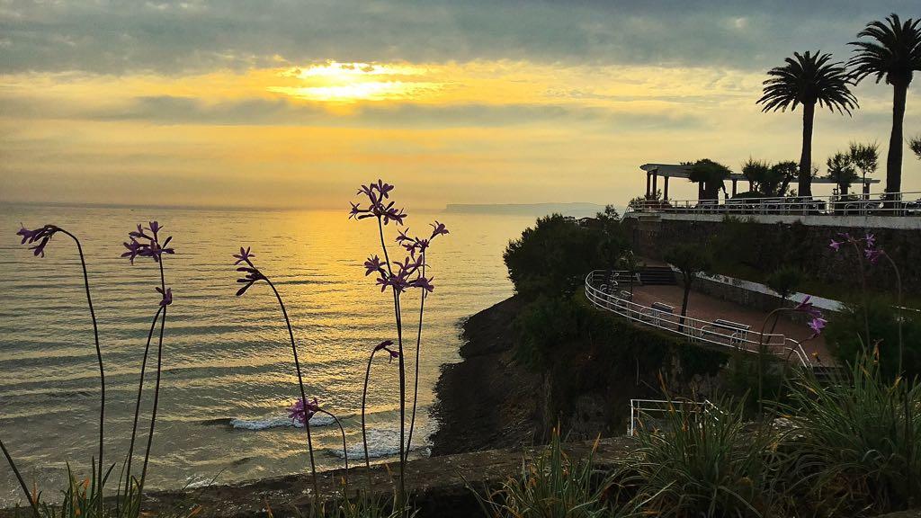 piquio-flores-amanecer