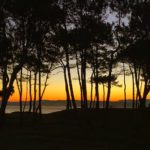 Bosque, mar, amanecer