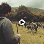 Ser ganadero ecológico en siete valles de Cantabria