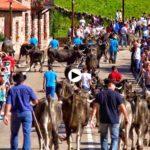 La pasá de Carmona. ¡Cómo nos gusta la Cantabria rural!