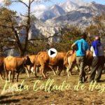 Feria de ganado en Collado de Hoz, Peñarrubia