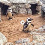Los pingüinos, el camello y una casita de cuento
