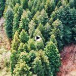 Ven y date una vuelta por el bosque de Secuoyas de Cabezón
