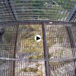 Fuente Dé y los rocosos Picos de Europa