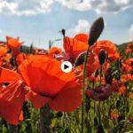 Tormentas y flores desbocadas en el sur de Cantabria