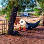 Dormir en Piquío por un día y con estas vistas