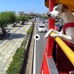 Cantabria bajo la mirada de Pipper, el primer perro turista que da la vuelta a España