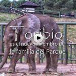 El nuevo bebé de Cabárceno se llama Toribio y es así de grande