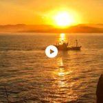 Atravesando el camino dorado para llegar a puerto con el mejor pescado del Cantábrico