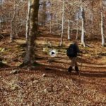 Por los bosques de hayas y acebos de Cantabria