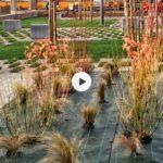 Los nuevos jardines del Ferry van tomando forma