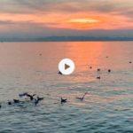 Gaviotas revoltosas en una calmada bahía