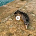 Hoy nos hemos encontrado una foca en el muelle Calderon y la hemos acompañado hasta el agua