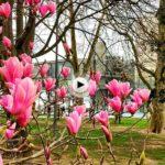 La primavera ya se deja sentir en los Jardines de Pereda