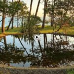 Pasar un rato de la mañana en el estanque secreto