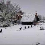 Buscando resguardo tras la nevada en Polaciones