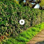 El verde primaveral de la senda de Mataleñas