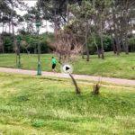 El verde primavera de la península de la Magdalena