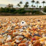 Las conchas de la segunda del Sardinero