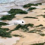Lo que nos ha dejado hoy la marea en la bahía