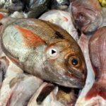 Mira que pescados nos hemos encontrado hoy viernes en la plaza de la esperanza