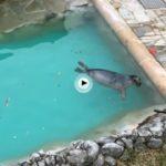 La foca bebé disfrutando de su baño mañanero
