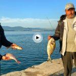 Esto es comenzar el verano con alegría… mira qué pesca están haciendo estos dos amigos