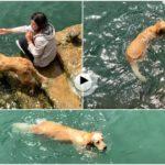 Felicidad perruna en la bahía de Santander: los coles de Mia