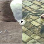 Escenas curiosas al borde del agua