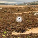 El Sardinero huele a algas