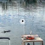 Un delfin en la dársenadel barrio pesquero. Hoy martes a las 11 de la mañana