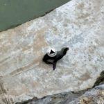 Un paseo por el mini zoo de la península de la Magdalena y con vistas al Sardinero