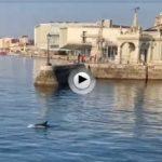 Un delfín se pasea junto a la farola del embarcadero en esta mañana de domingo